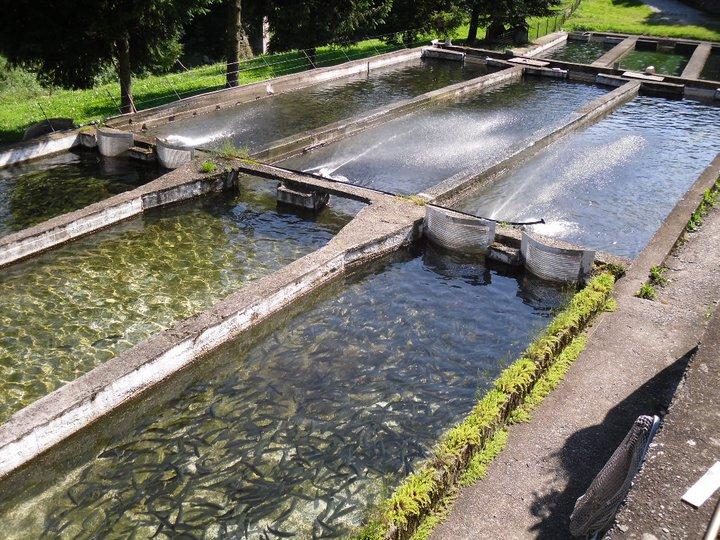 Vasche Per Allevamento Trote Of Allevamento Trote Manuel Bovio Ecoredia